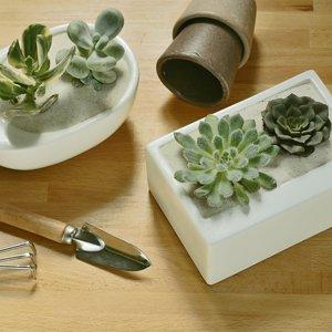 changer-air-plantes-depolluantes